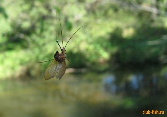 сонник кузнечик ловить