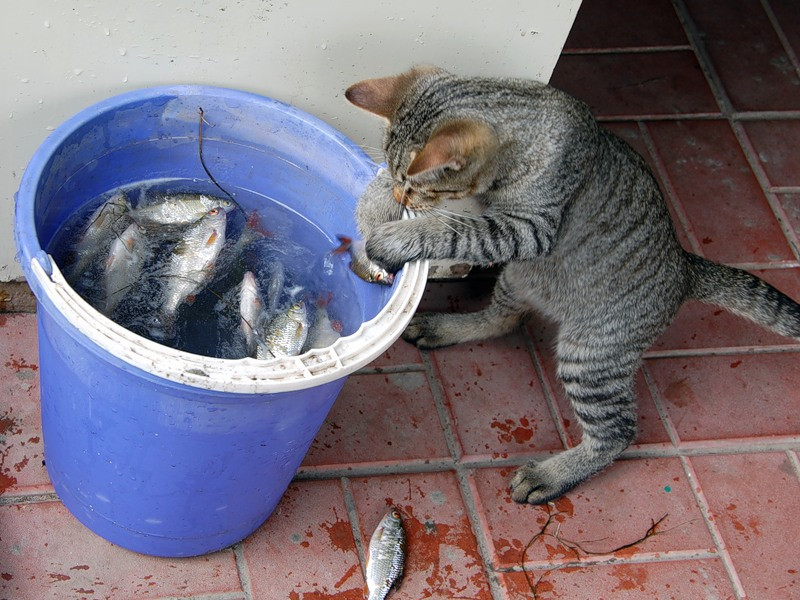 сочинение на тему как барсик ловил рыбу 5 класс